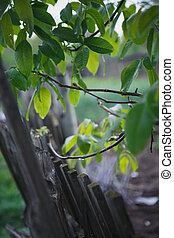 rain drops on tree branches and fence - rain drops on the...