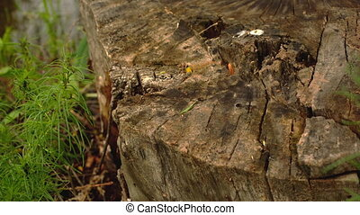 ants crawling on the stump - ants crawling on a rotting...