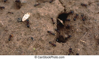 the ants crawl into the anthill and enter production