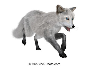 3D Rendering Polar Fox on White - 3D rendering of a polar...