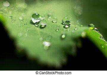 dewdrops on a green leaf