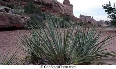 Yucca Man Hikes to Right - Yucca plant blows in the wind...