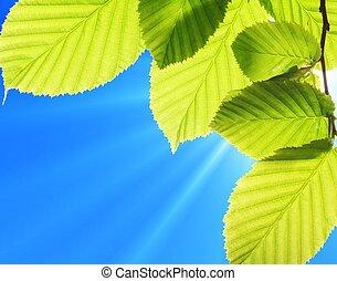 藍色, 天空, 葉子
