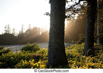 Trees shrouded in light - Trees with dun halo surrounding...