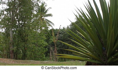 bamboo and palm tree