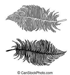 beautiful Boho feathers - beautiful vector illustration of...
