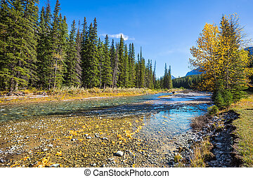 Creek, autumn and  pine forest