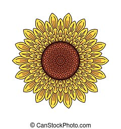 Sunflower illustration vector