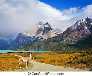 On a dirt road is worth guanaco - Lama - Majestic peaks of...