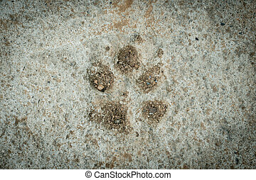 Dog foot print - dog foot print on concrete