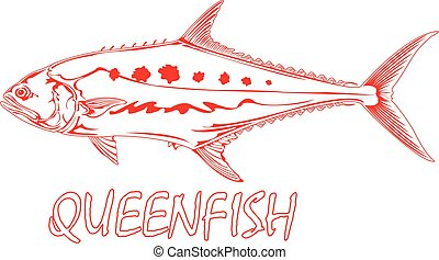 Queenfish - Outline of a Queenfish