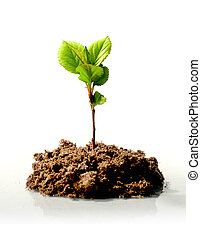 New life concept. - Small plant. New life concept.