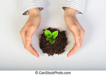 小さい, 植物, 手