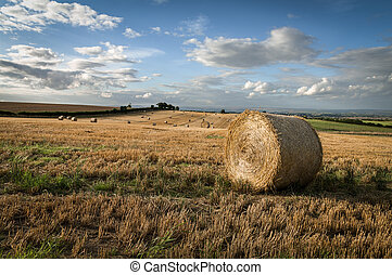 Round Straw Bales - Field Stubble - Round Straw Bales in...