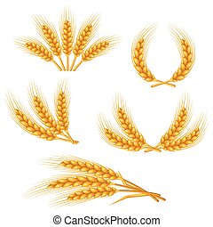 Design elements with wheat Agricultural image natural golden...