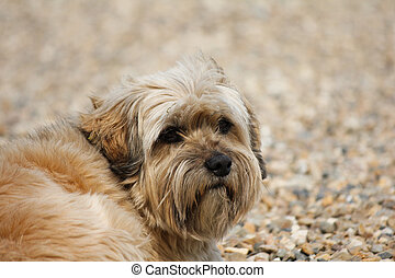 Mixed breed dog