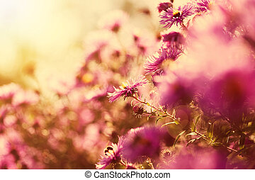 Beautiful wild pink flowers in the sunshine