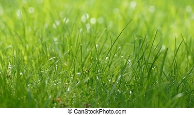 grass swaying slow motion video - green grass sways in the...