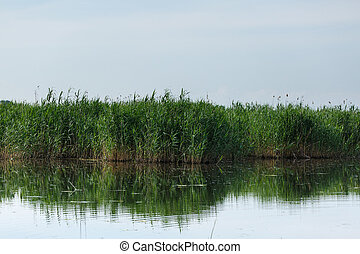 Reeds and lake - Landscape with reeds and lake under clear...