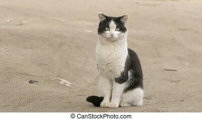 cat sitting on the road slow-motion video - white cat with...