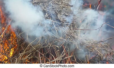 The fire burning dry branches