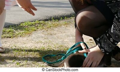 terrier dog on a leash playing slow motion video - terrier...