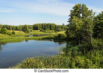 Small forest lake in summer - Country landscape with small...