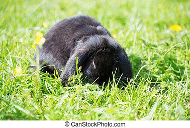 草, 兔子, 綠色, 黃色, 花