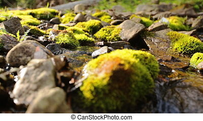 Close up of stones and rocks covered by moss along water...