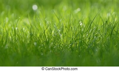 small grass lawn slow motion video - close up small grass...
