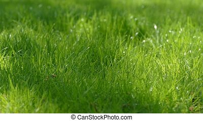 green thick grass slow motion video - thick green grass in...