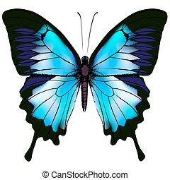 Butterfly vector illustration Beautiful azure isolated...