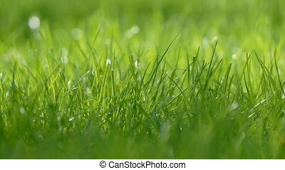 thick grass close up slow motion video - green thick grass...