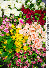 Colorful flowers - Many various multicolored flowers...