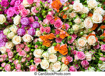 Colorful flowers - Many various colorful flowers closeup