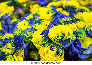 Blue and yellow roses in bouquet close up