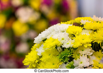 Beautiful marguerites - Bright yellow and white marguerites...