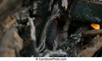 charred branches in the fire - charred black branches in the...