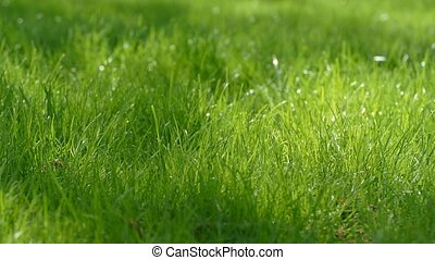 rays of the sun on a green lawn slow motion video - rays of...