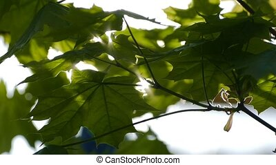 a ray of sunshine through the leaves slow motion video -...
