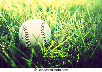 Baseball game Baseball ball in grass
