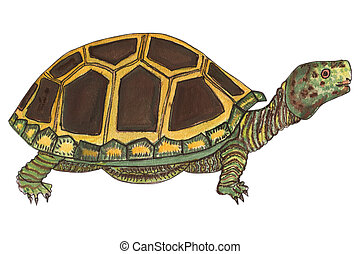 tortoise in a watercolor - this is a beautiful colorful...