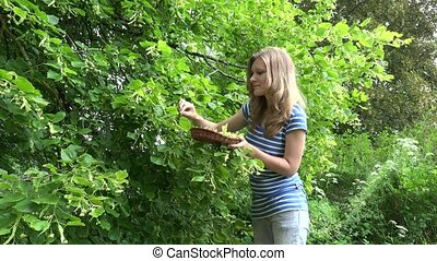 girl picking and smell linden flowers from tree branches. -...