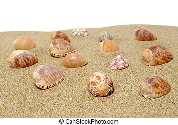 seashells - a pile of seashells on the sand on a white...