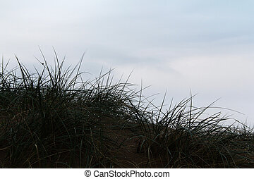 View from the sand dunes at first light