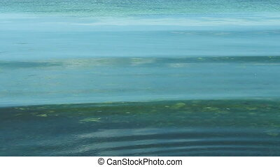 Water with green seaweed at coast - Waves surf in shallow...