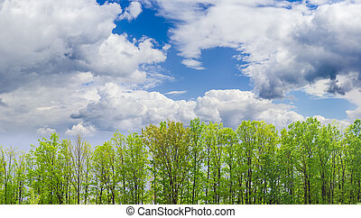 Deciduous trees against the sky with clouds spring day -...