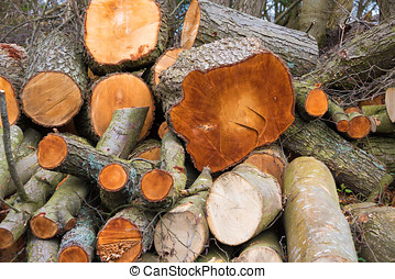 Stockpile of Logs