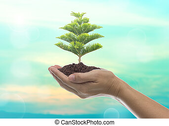 Growth - Human hands holding large trees growing in soil.