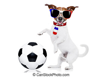 soccer football dog with ball - euro 2016 France football...